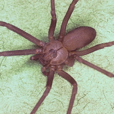 & Top 10 Very Deadliest Spiders - Wonders-World.com